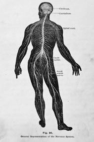 diabetes-and-nerve-damage2